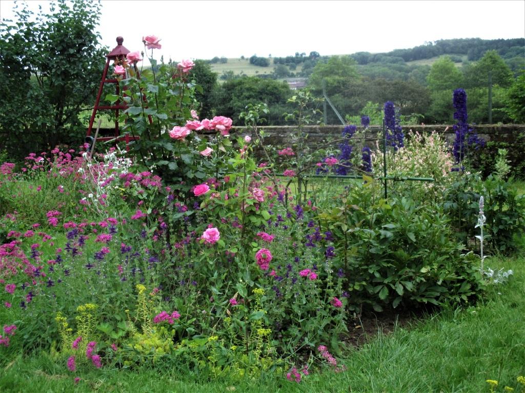 rosier, sauge horminum, delphinium, coquelourdes, vivaces en rose et bleu